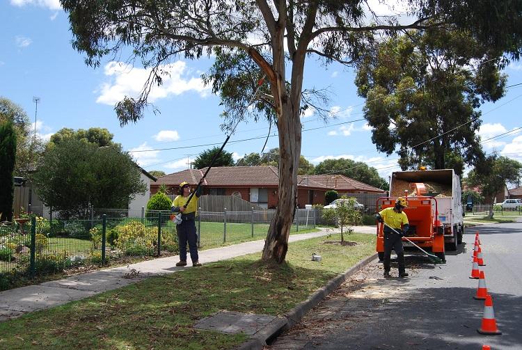 Synesthesia Garden Page 8 Keep You Home And Garden Clean
